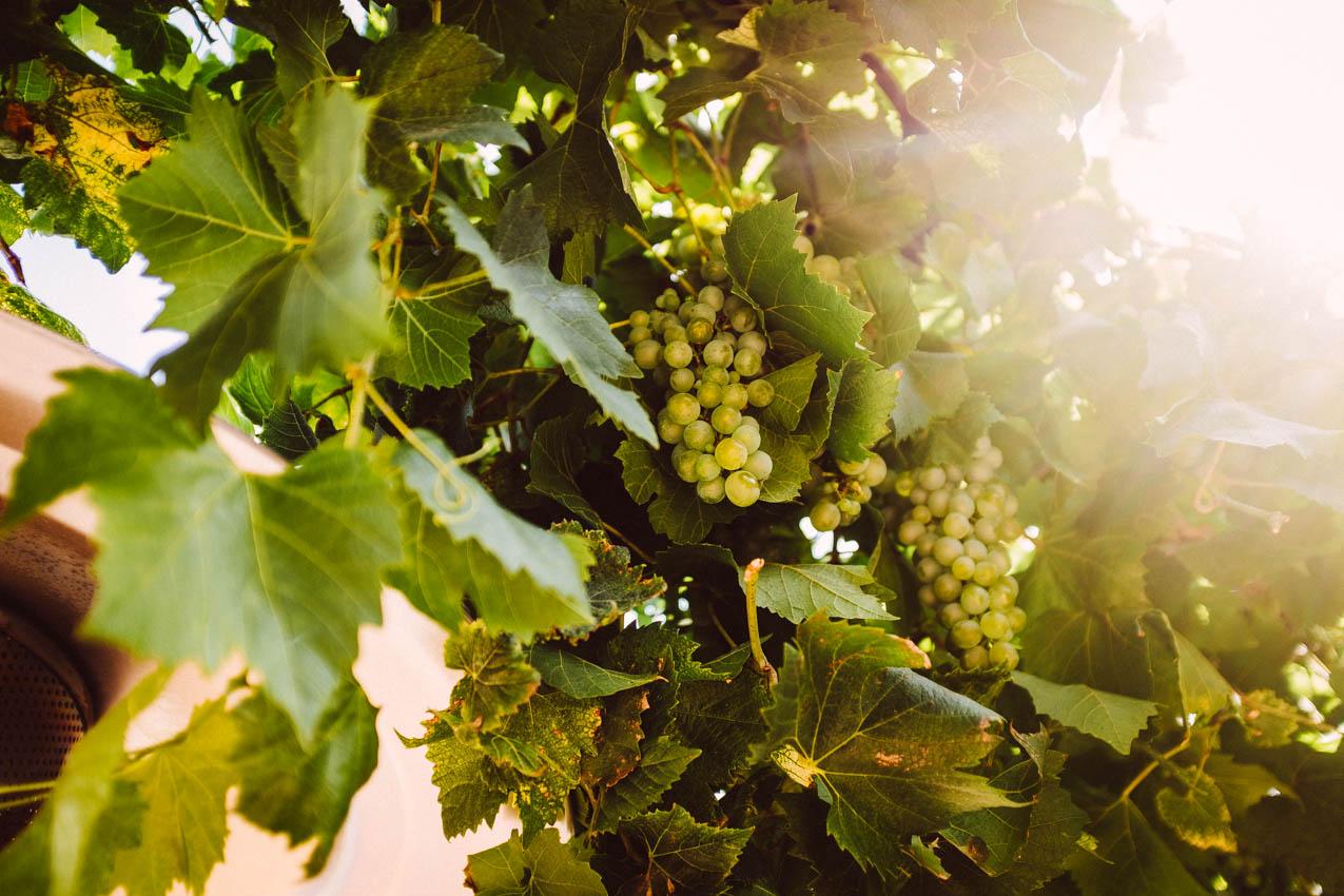 Wine for a day – ein Tag im Rheingau
